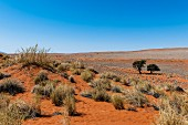 A desolate desert landscape in the NamibRand Nature Reserve, Namibia, Africa