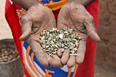 Hände eines Mbukushu-Mannes halten Kürbiskerne, Namibia
