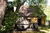 Old wine barrels at the Karl Friedrich Aust vineyard in the Radebeuler Oberlössnitz region, Saxony