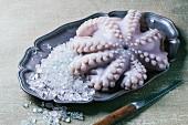 Raw octopus on ice