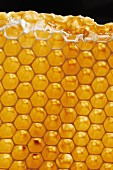 A golden honeycomb
