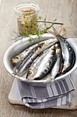 A bowl of fresh sardines