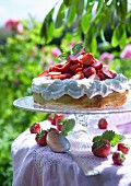 Sponge cake with cream and fresh strawberries