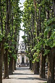 A tree-lined avenue leading to the Mausoleum der Familie Moretti, Cimitero Monumentale, Milan