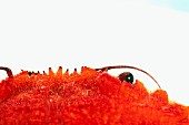 A crab (detail)