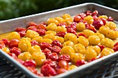 Roasted red and yellow cherry tomatoes