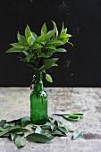 Bay leaves in a green bottle