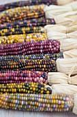 Various coloured corncobs