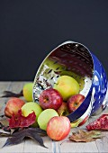 Fresh apples with autumn leaves in a colander