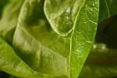Green salad leaves (close-up)