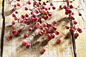 Fresh pink peppercorns on a vine