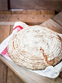 A round loaf of homemade sour dough rye-wheat bread on a tea towel