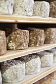 Cheese ripening on shelves, Alsace
