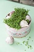 Frische Gartenkresse & Knoblauchknollen in dekorativer Metalldose