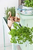 Frische Küchenkräuter in lindgrüner Vintage-Blumenbank