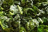 Chopped Tuscan kale, (cavolo nero, Italy)