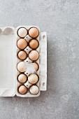 Hühnereier mit Feder im Eierkarton