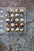 Quail eggs in an egg box (seen from above)