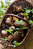 Fresh wild mushrooms in a wicker basket