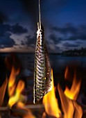 Mackerel over a fire