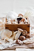 Fresh mushrooms in and in front of a wooden box