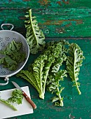 Fresh green kale with a colander and a knife