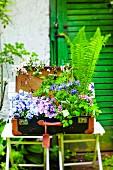 Bepflanzter Koffer mit Sommerblumen und Farn