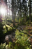 A beautiful spring day following a stream though a forest, Ostwestfalen-Lippe