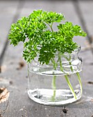Sprigs of parsley in a glass of water (close-up)