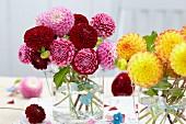 Rot, pink & gelb blühede Pompondahlien in Glasvasen