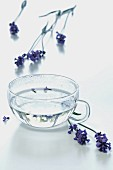 A glass cup of lavender tea with lavender sprigs