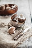 Fresh brown mushrooms on slices of bark on a piece of hessian