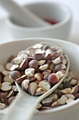 Foxnut seeds in a porcelain bowl
