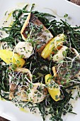 Seabass with scallops and samphire
