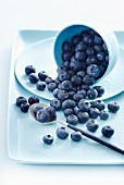 Fresh blueberries in an overturned bowl and on a spoon