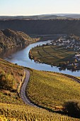 Wine landscape by the River Mosel at a bend in the river