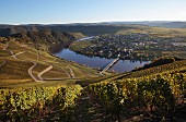 The wine-growing landscape on the Mosel River
