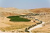 Vineyards in the Negev desert, Israel