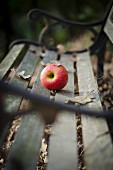 Red apple an autumn leaves on wooden bench
