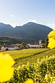 Vineyards at Neustift abbey, South Tyrol