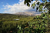 A view of the Golan Heights and Mount Hermon, Israel
