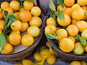 Baskets of lemons