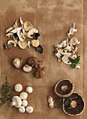 Pilze, frisch und getrocknet