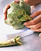 An artichoke stem being broken off
