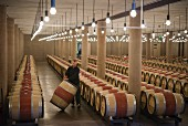 A view into the large barrique cellar at Chateau Latour (Bordeaux, France)