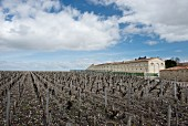 Mouton-Rothschild vineyard (Bordeaux, France)