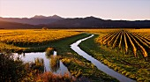 Herbstliches Sauvignon Blanc Weinanbaugebiet am Oyster Bay in Wairau Valley mit Gibsons Creek & Richmond Ranges im Hintergrund (Marlborough, Neuseeland)