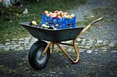 Apfelkisten in Schubkarre
