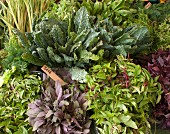 Fresh herbs and kale on a market stand