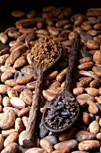 Cocoa beans, cocoa powder and broken cocoa bean pieces